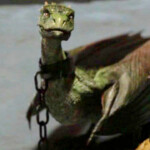 Dragon Rhagal