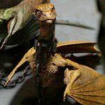 Dragon Viserion